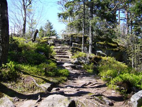 L'immersion en pleine nature ou la cure de forêt : Késako ?