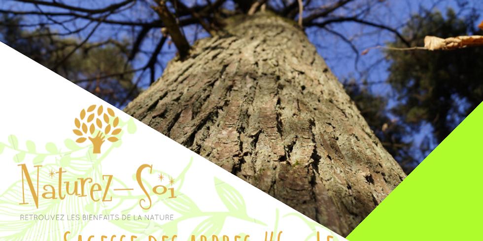 Sagesse des arbres #6 - Le Chataignier