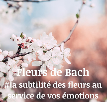 #la subtilité des fleurs de bach au service de nos émotions