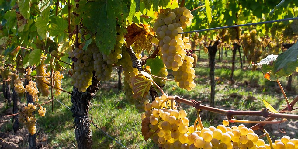 Les 1001 vertus de la vigne