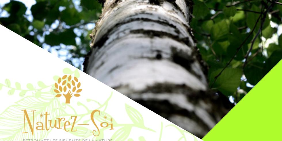 Sagesse des arbres #5 - Le Bouleau