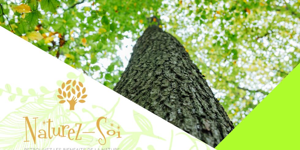 Sagesse des arbres #1 - Le Chêne
