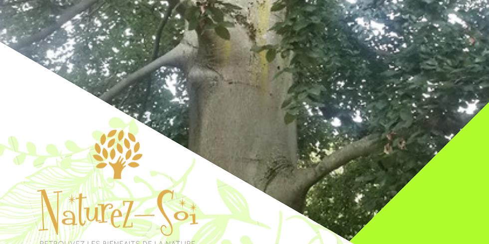Sagesse des arbres #4 - Le Hêtre