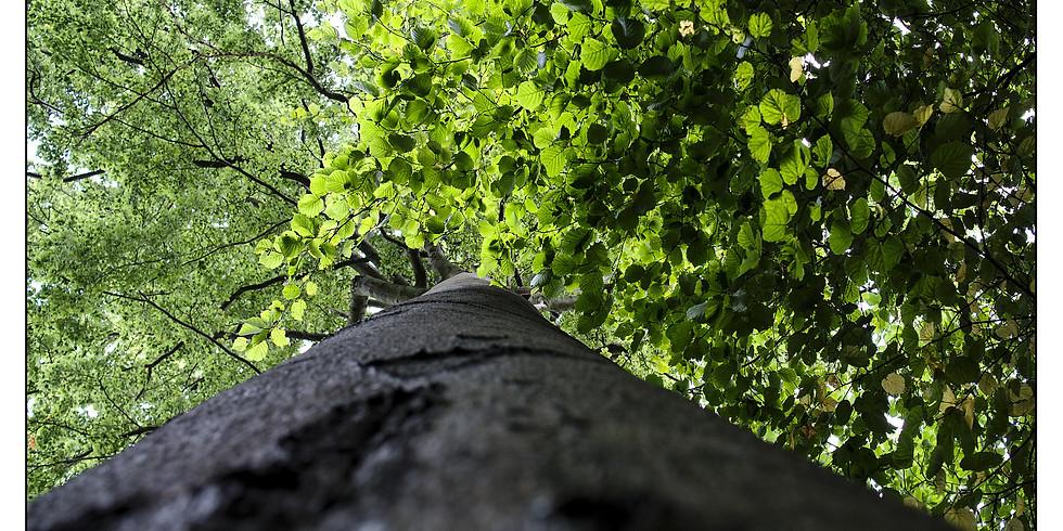 Bain de Forêt - Spécial Déconfinement et Confiance