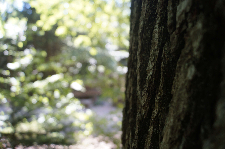 Bain de forêt groupe 2h
