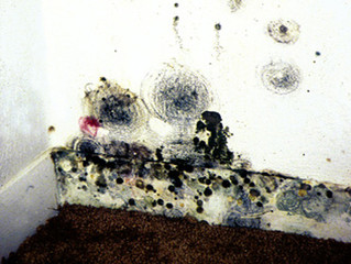 I suspect mold in my workplace. How do I test for mold?