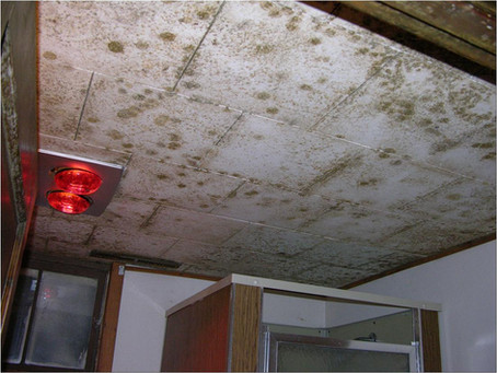 Facts about Mold and Dampness