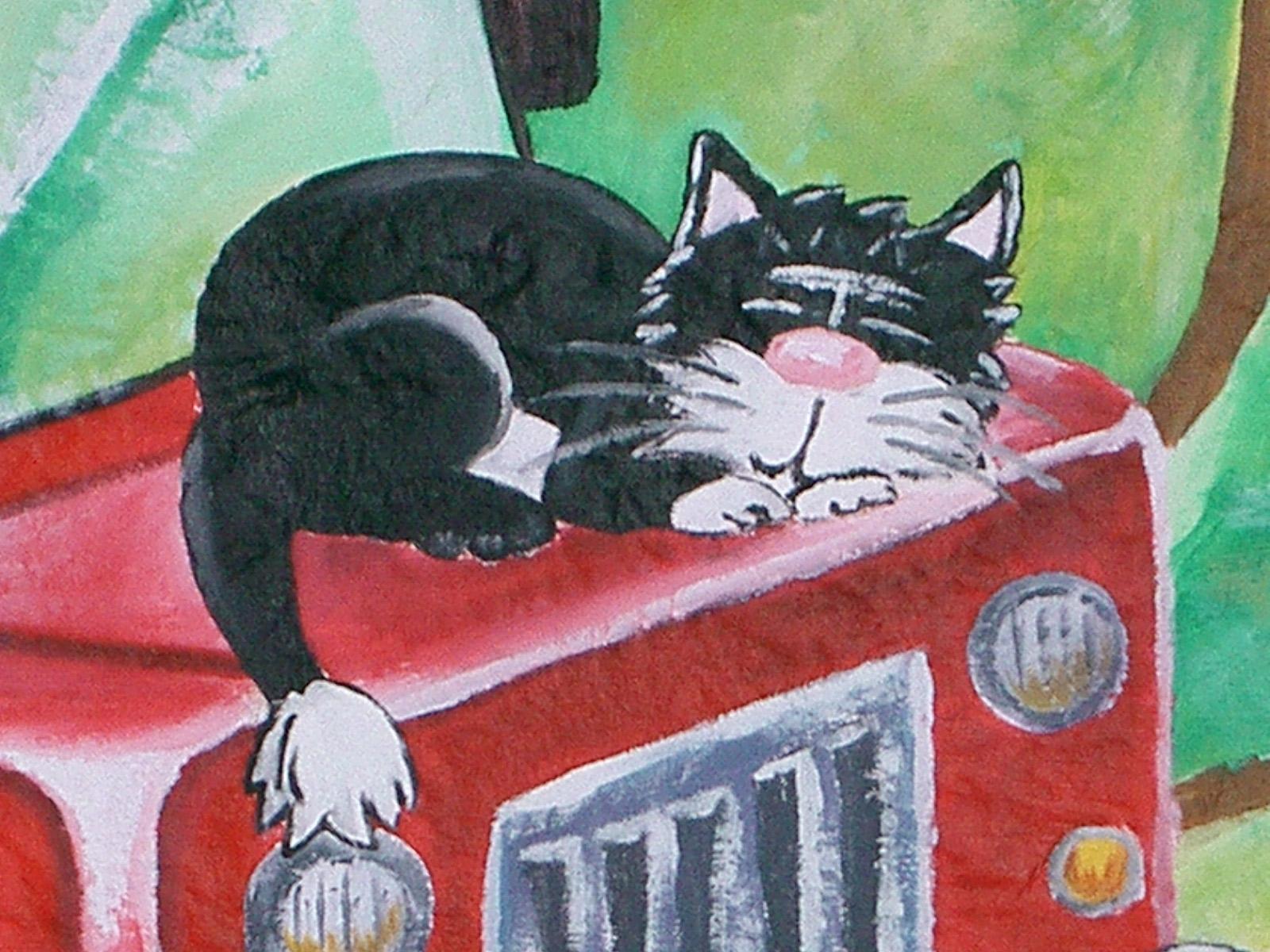 PMP cat