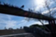 BikePathSignSillouette.jpg