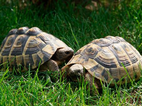 Alt und älter: Schildkröten haben im Var ihr eigenes Dorf