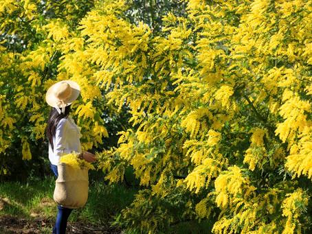 Zeit für eine Mimosen-Wanderung!