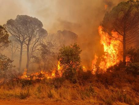 Großbrand an der Côte d'Azur: Lage bleibt angespannt