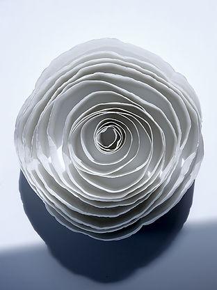 still-life-papier toilettes