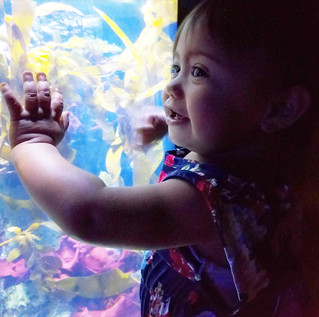 Cali Moms' Summer Must Stop: Aquarium of the Pacific
