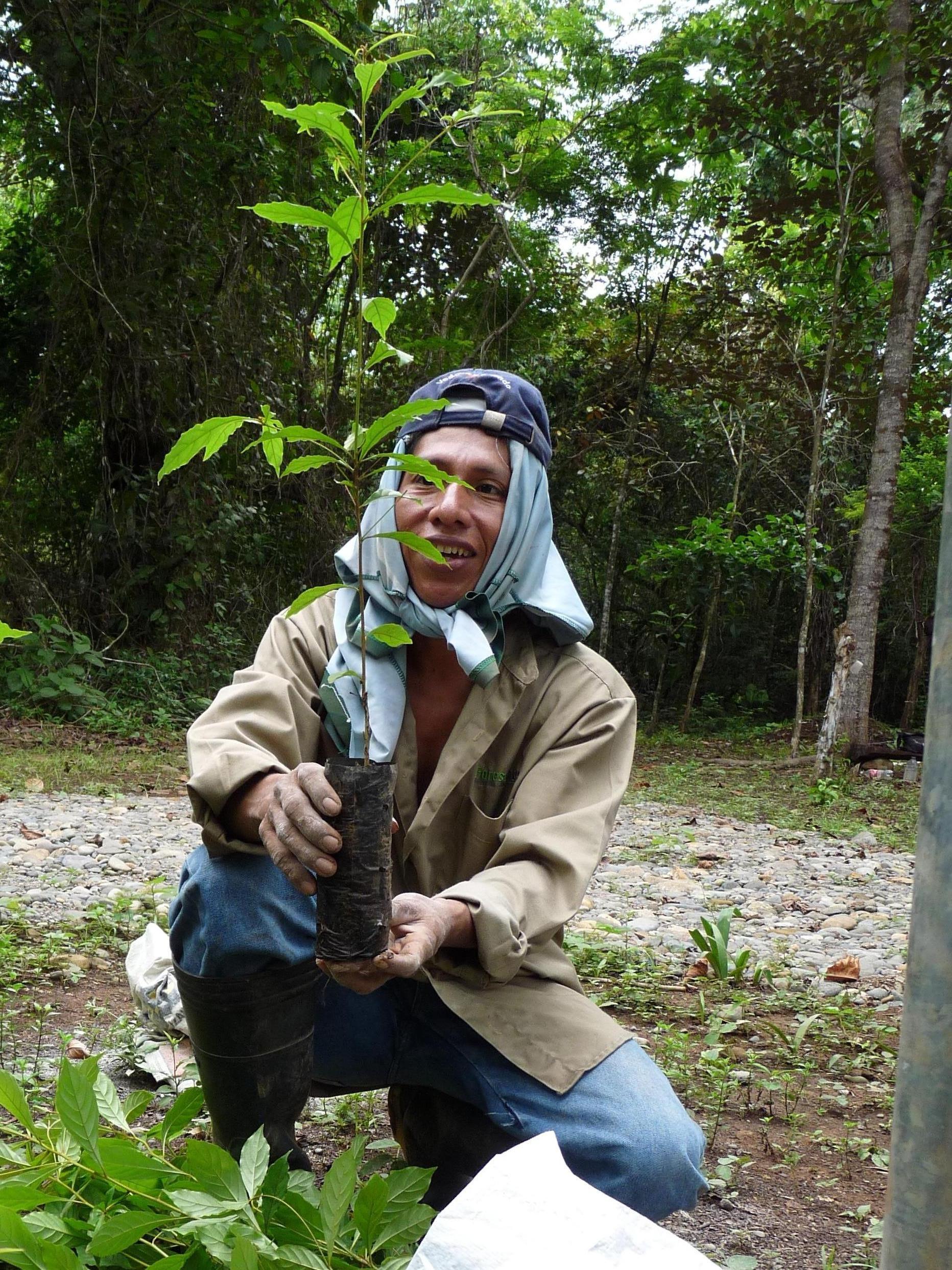 baumschule-forestfinance_4523510281_o_34
