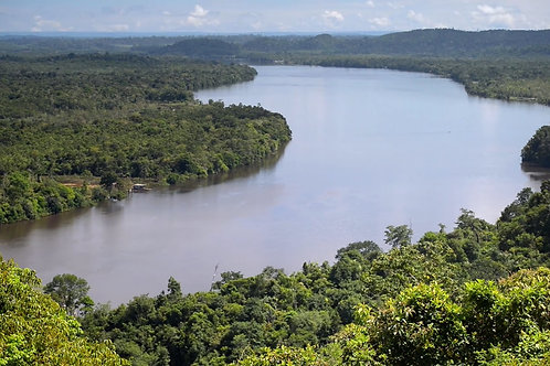 Forest protection, Brazil