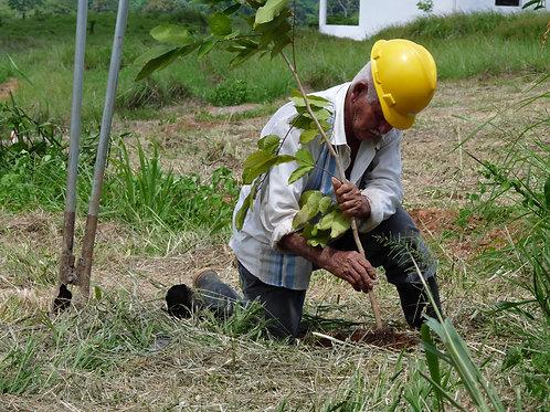 Plant a tree, Panama