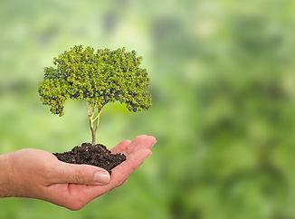 tree in hand.jpg