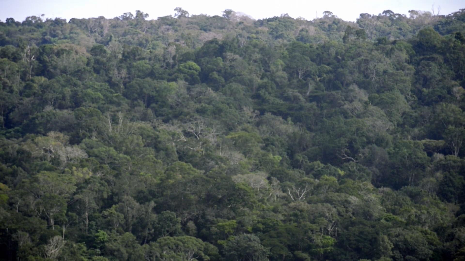 floresta_video.jpg