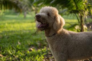 Dogs & Goslings Photos-10.jpg