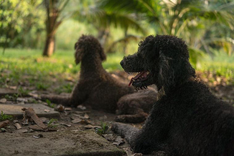 Dogs & Goslings Photos-6.jpg