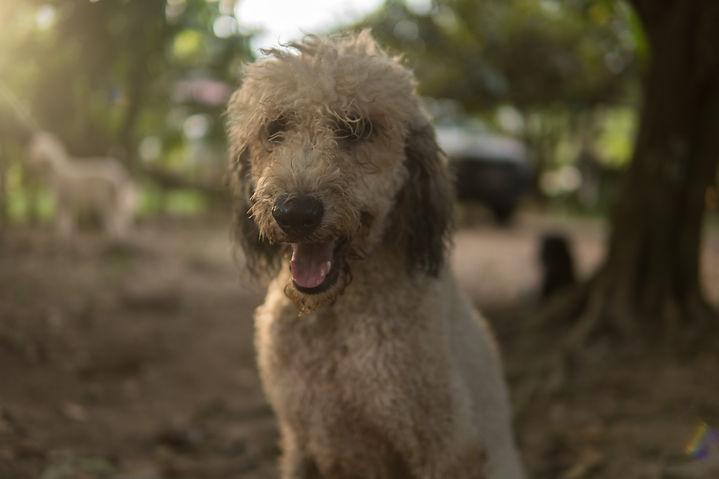 Dogs & Goslings Photos-33.jpg