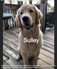SULLEY FROM THE RACE LITTER