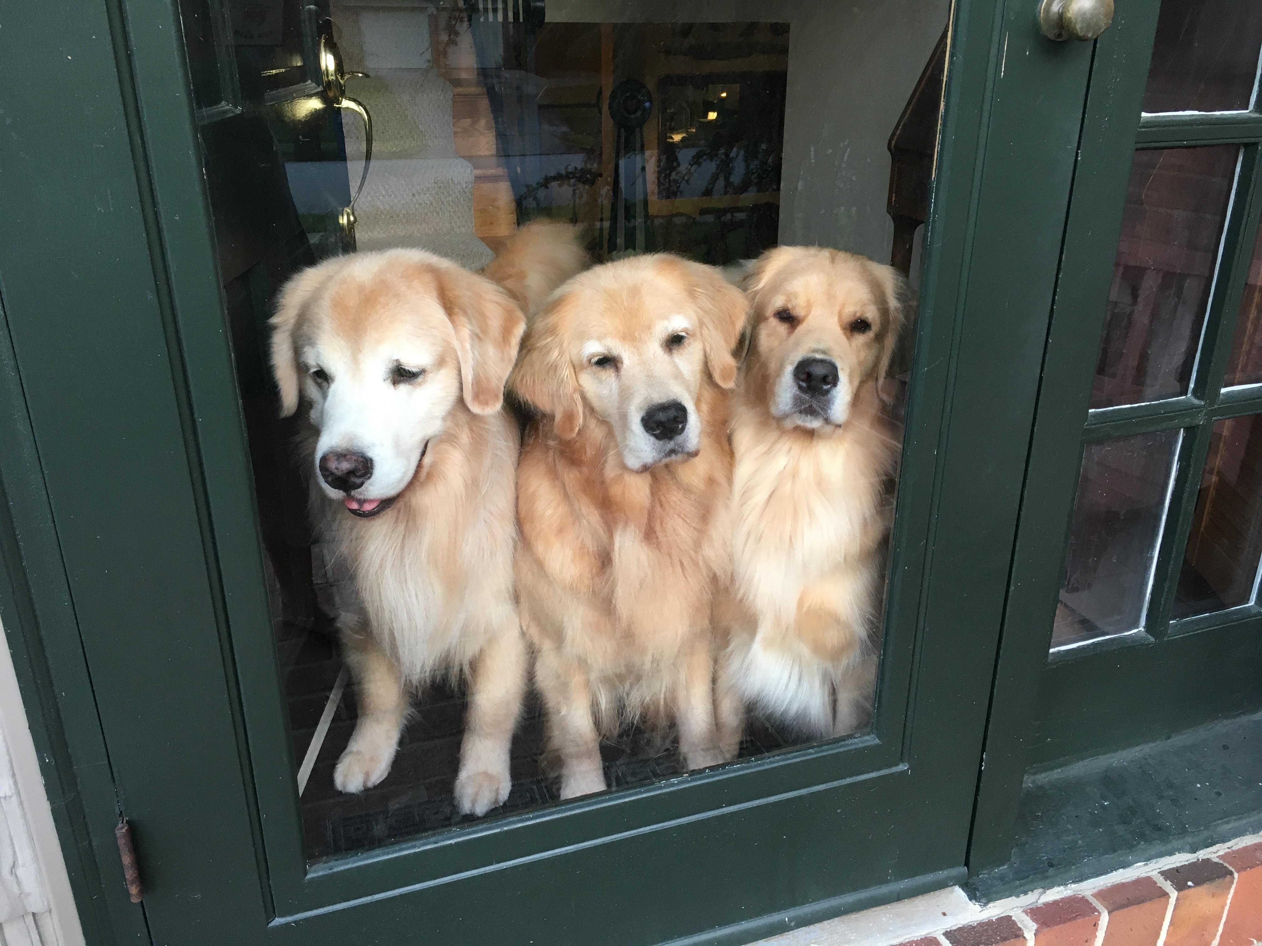 Brydon, Bryn, Bree - Welcome