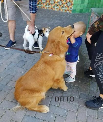 DITTO_edited.jpg