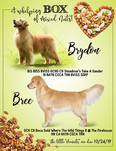 Announcement The Mixed Nuts Litter Brydo