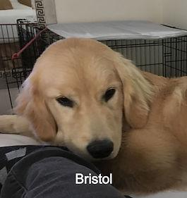 Bristol%208_edited.jpg