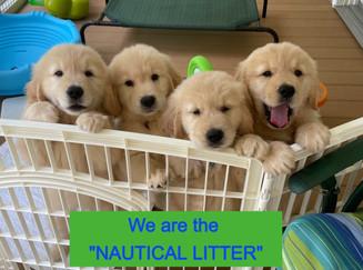 Nautical Litter July 2021