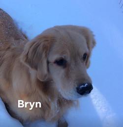 Bryn having fun in the snow