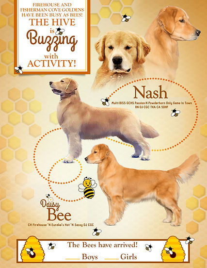 Announcement  Nash X Daisy Bee 4_24_2020
