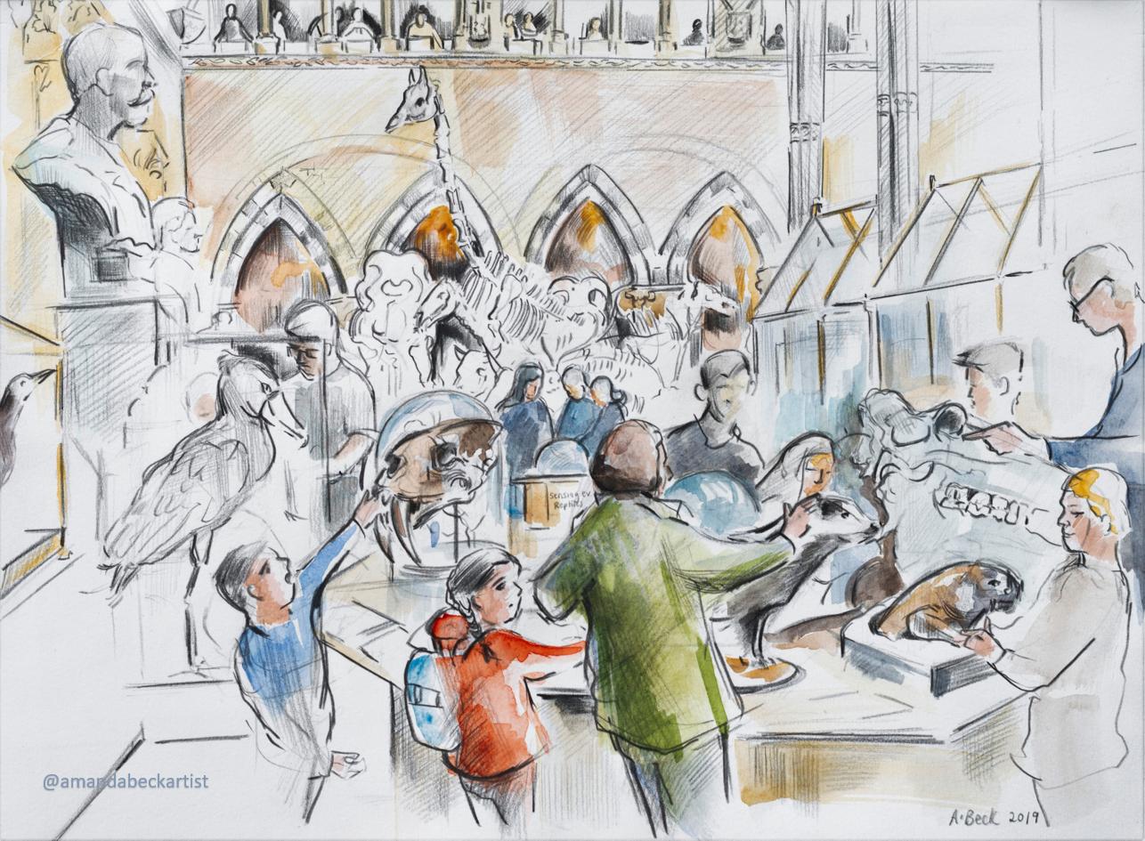 Oxford NHM Reportage Drawing