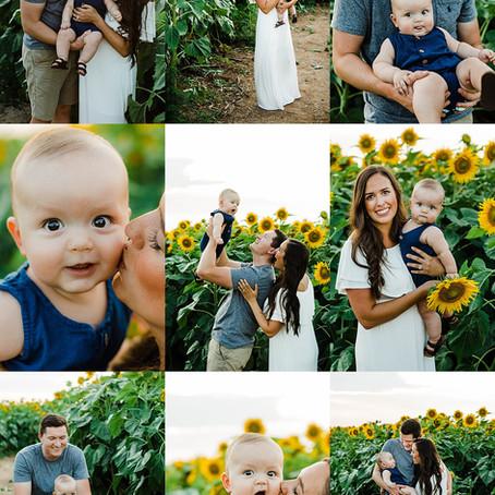 Sunflower Mini Session - Appleton Family Photographer
