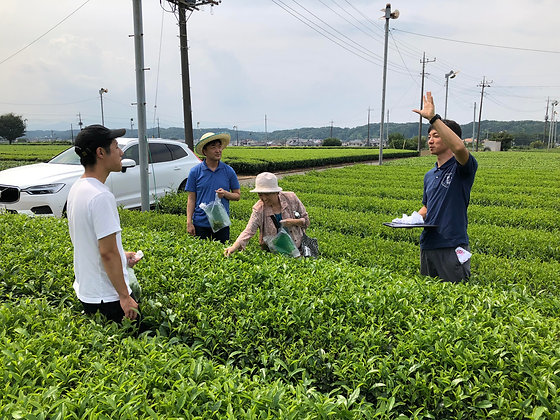 """Oct.17 A """"full course"""" program for anyone to  learn about green tea"""
