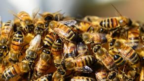 蜜の味ふたたび
