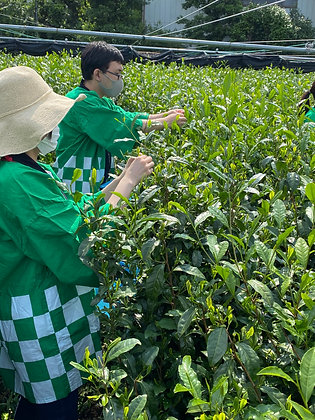 """Jun.25 A """"full course"""" program for anyone to learn about green tea"""