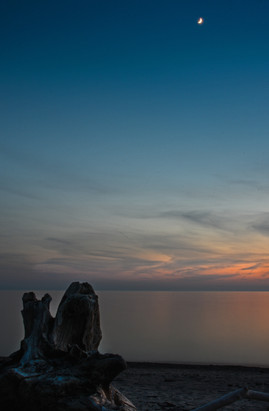 sunset with stump with moon.jpg