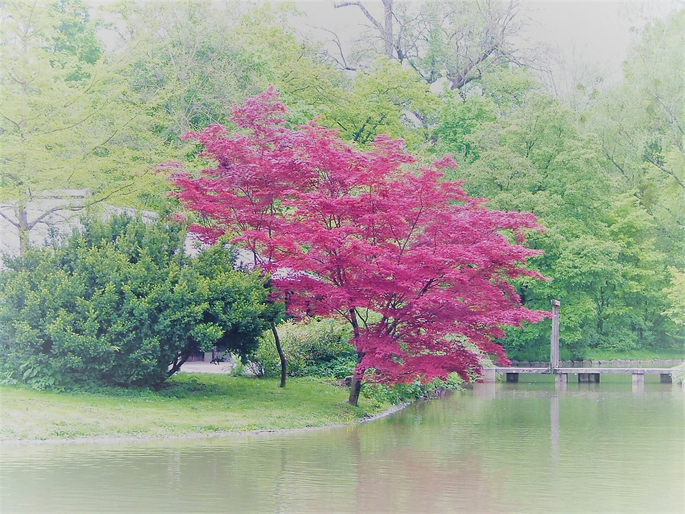 red tree in focus