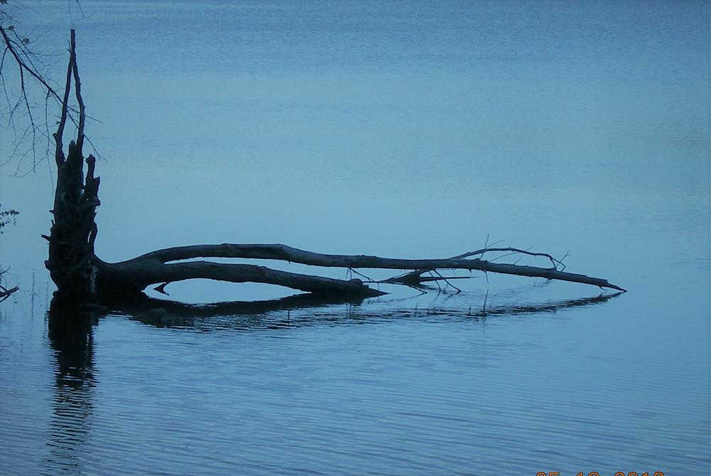 רגשי אשמה בדמנציה כעץ שבור במים