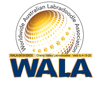 cherry-valley-labradoodles-wala-logo-041