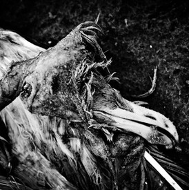 ALMAR SETZ FOTOGRAFIE - KALENBERG - WEERRIBBEN