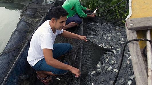 Laarni Ditablan Fish Fingerlings.jpg