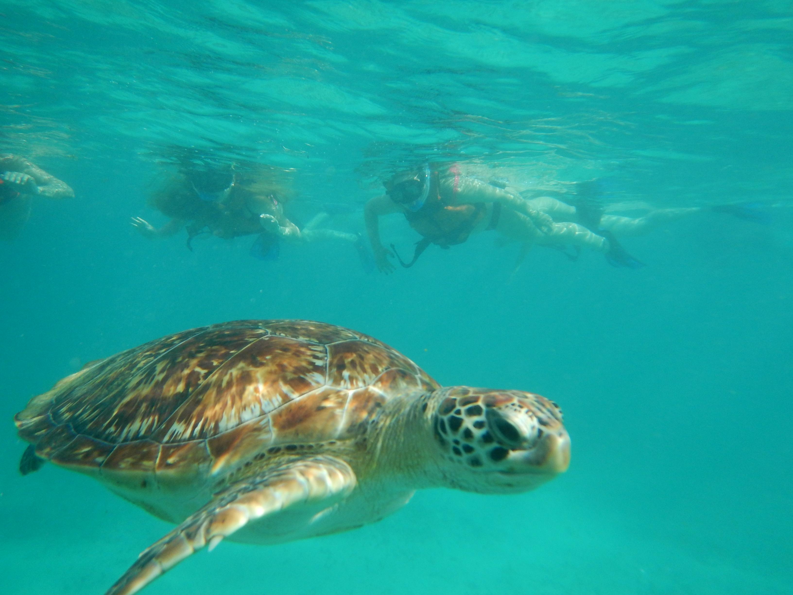 Snorkel Cenote & Tortugas225
