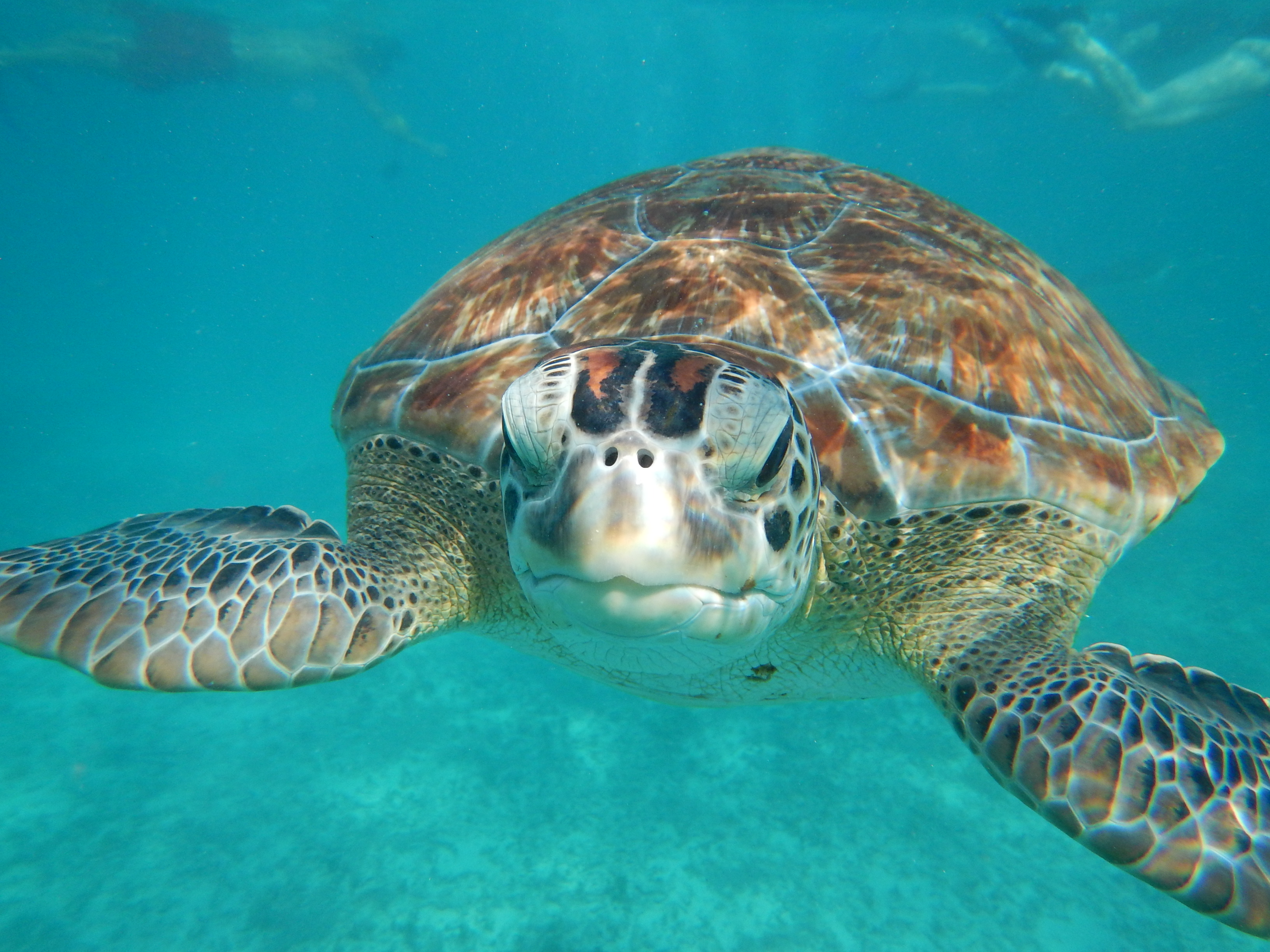 Tulum Turtle Snorkel