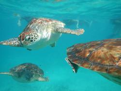 Snorkel Cenote & Tortugas224