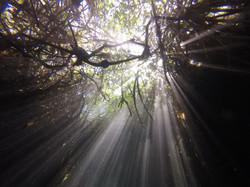 Cenotes in Tulum