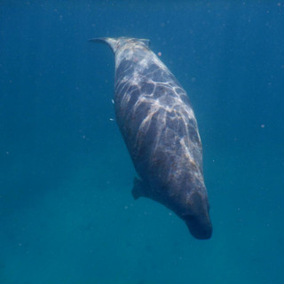 Punta Allen snorkel in Tulum2.JPG